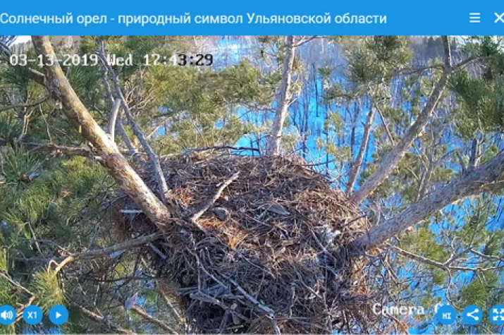 Камера у гнезда солнечного орла