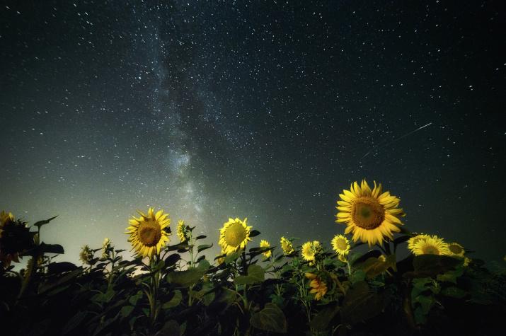 Фото: Роман Склейнов