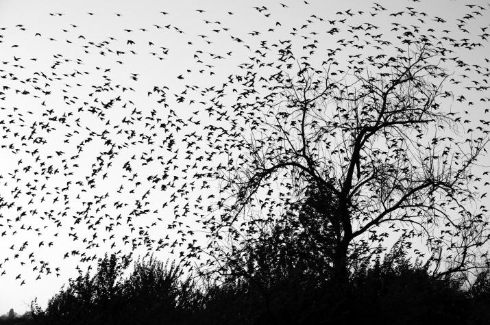 """""""Птицы"""". Фото: Надежда Муравьёва"""
