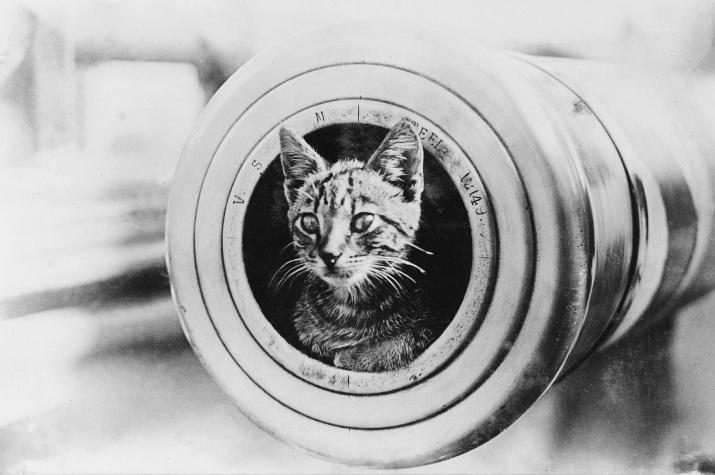 """Корабельный кот в стволе орудия австралийского крейсера """"Энкаунтер"""". Источник: wikipedia.org"""