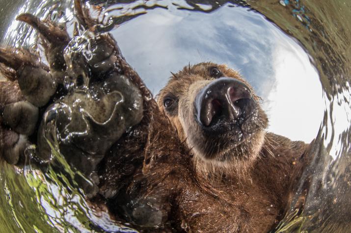Любопытство. Фото: Михаил Коростелёв
