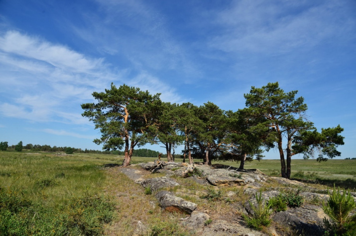 Сосновое редколесье на гранитах