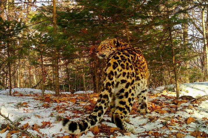 "Фото предоставлено нацпарком ""Земля леопарда"""