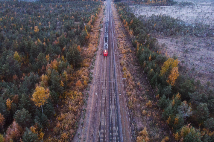 Между лесом и болотом, Ленинградская область. Фото: Юрий Столыпин