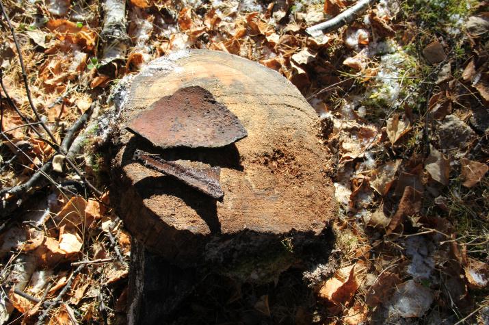Рис. 3. Спил древесины с моста (вероятно с периода действовавшего тракта) и осколки чугунного котелка.