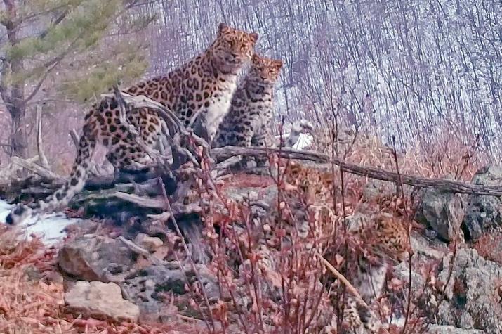 """Фото предоставлено национальным парком """"Земля леопарда"""""""