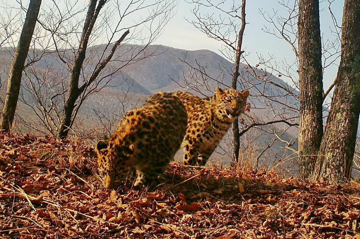 """Фото: отдел науки национального парка """"Земля леопарда"""""""