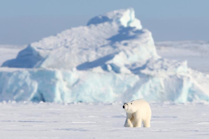Царь Арктики. Фото: Гавриил Григоров