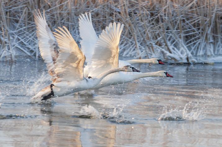 Photo: Oleg Panteleyev. Fly to warmer climes