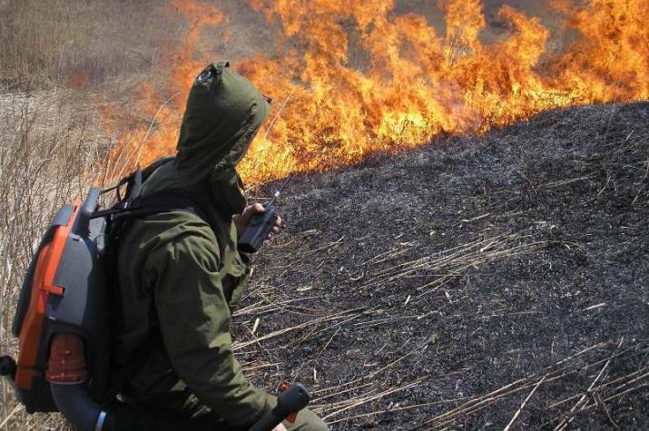 Пожары в национальном парке ''Земля леопарда''. Фото предоставлено ФГБУ ''Земля леопарда''