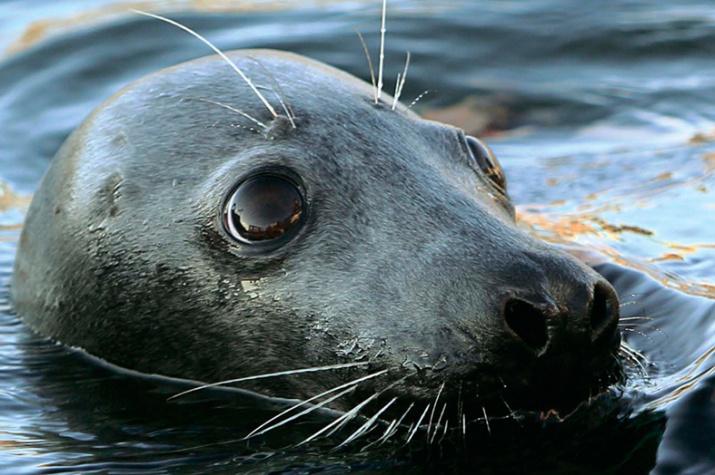 Фото предоставлено Советом по морским млекопитающим