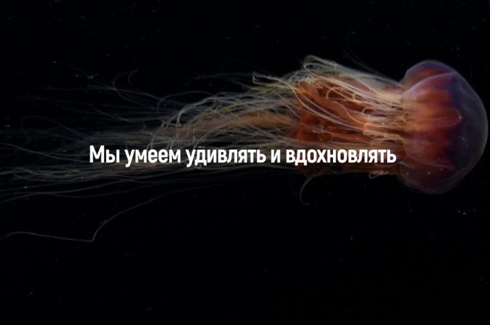 Русское географическое общество: итоги 2018 года