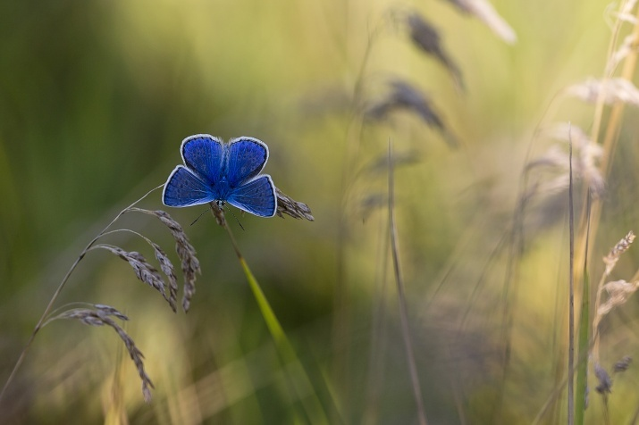 Photograph by: Tatyana Maksimova,