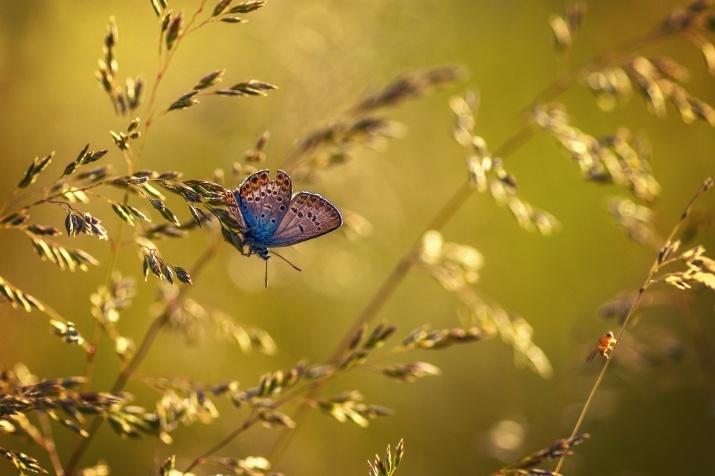 Photo by: Marina Murashova
