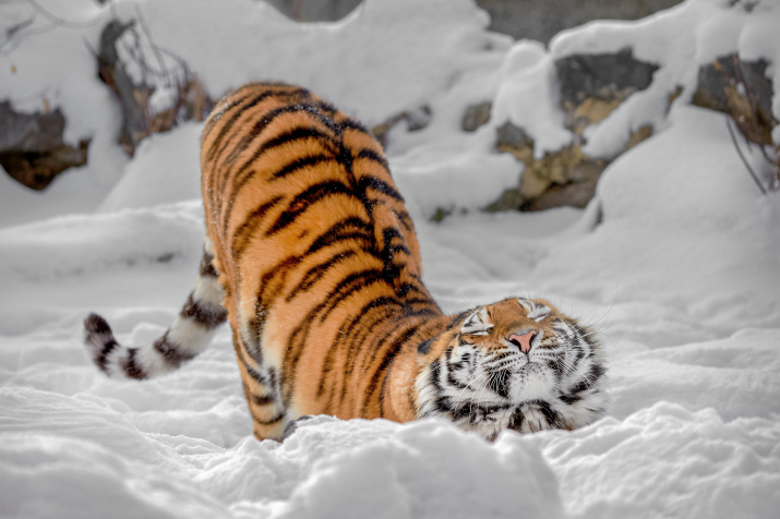 Фото: Олег Богданов