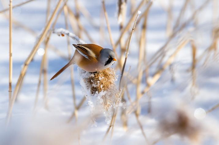 Фото: Андрей Костромин