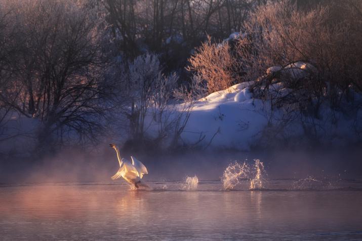 Фото: Николай Денисов