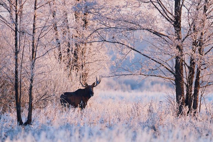 Фото: Евгений Мазурин