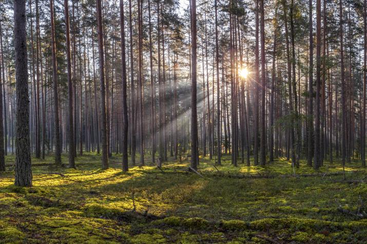 Фото: Арсений Кашкаров