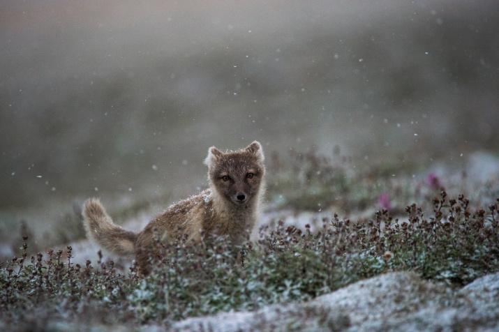 Фото: Григорий Цидулко