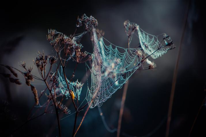 Фото: Дмитрий Вахрушев