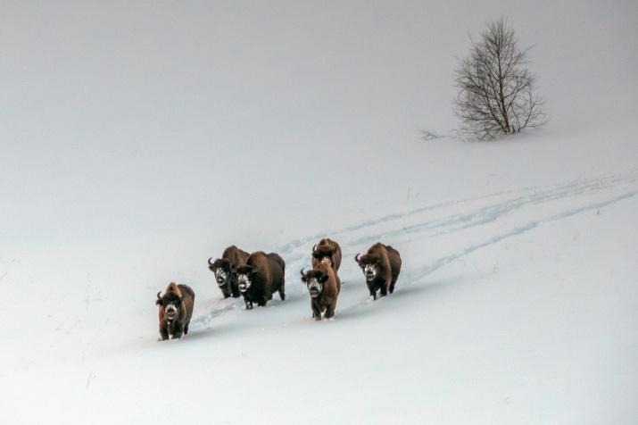 Фото: Дмитрий Андреев