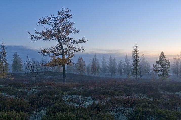 Фото: Сергей Городничев