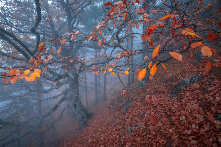 Хранитель леса. Фото: Михаил Дубровинский