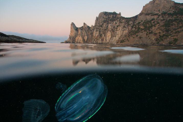 Царство Нептуна. Фото: Егор Никифоров