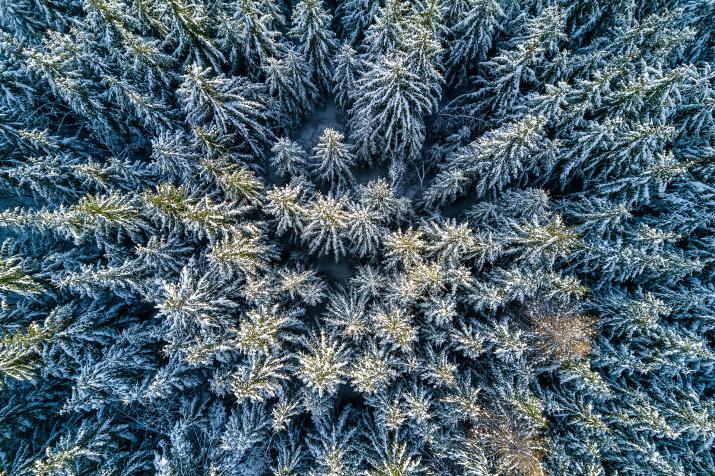 Зимняя тайга. Фото: Василий Яковлев
