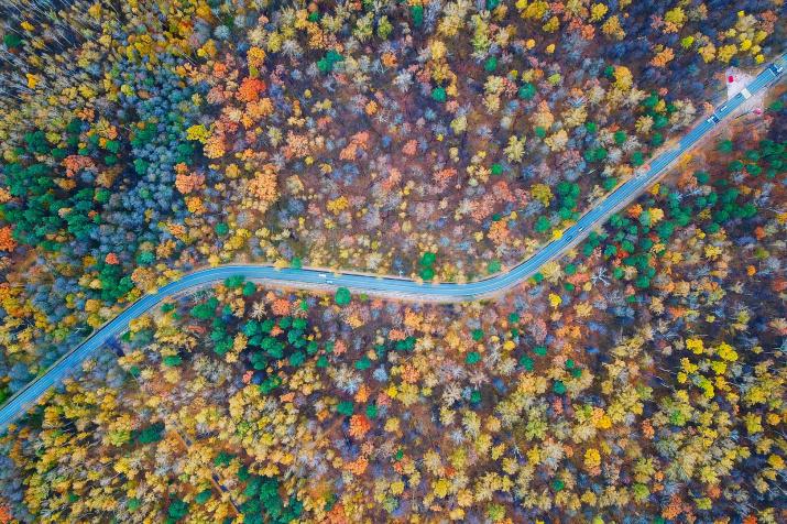 Лесная дорога. Фото: Станислав Игнатов