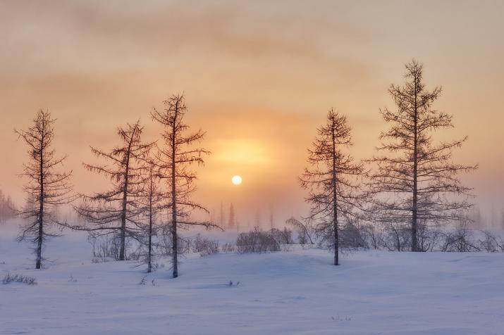 Морозный северный рассвет. Фото: Николай Купченко