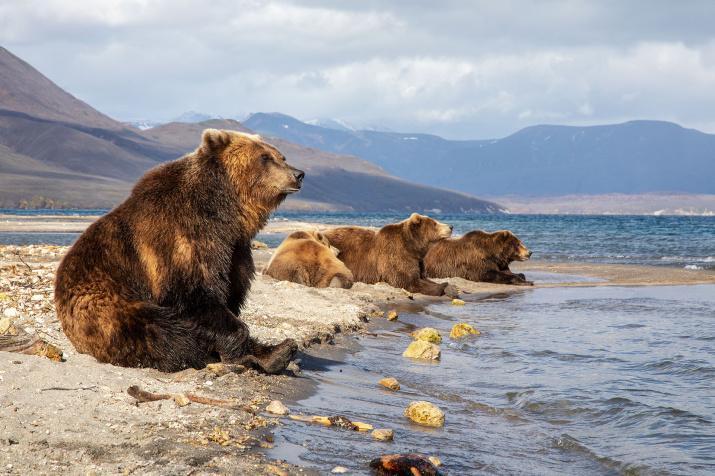 Медвежье лежбище. Фото: Константин Шатенев