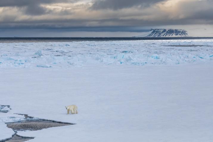 Хозяин Арктики. Фото: Кирилл Уютнов