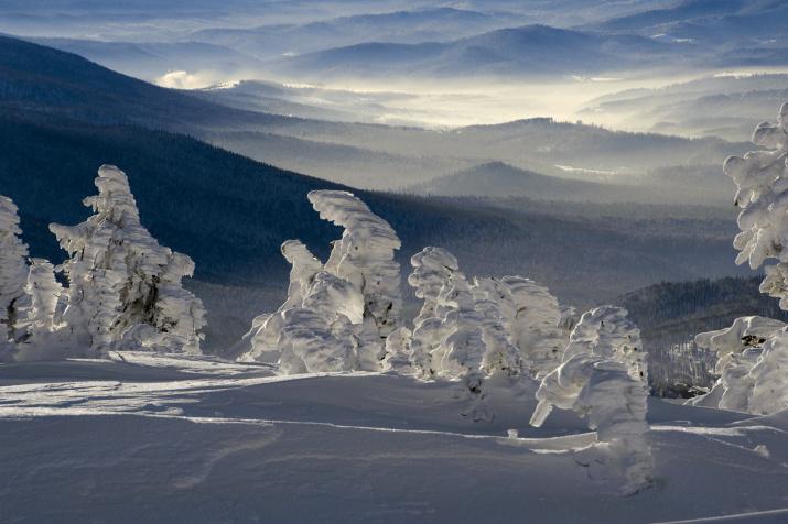 Про волшебный Шерегешский лес. Фото: Валерий Пешков