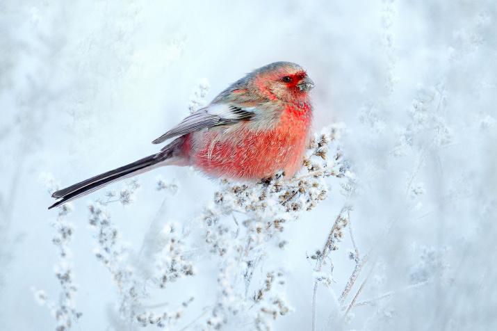 Краски зимнего луга. Фото: Владилен Зубарев