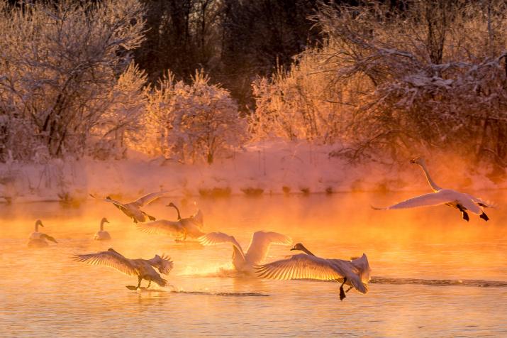 Полёт на рассвете. Фото: Евгений Кожевников