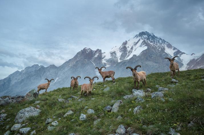 Хозяева Кавказа. Фото: Наталия Федосова