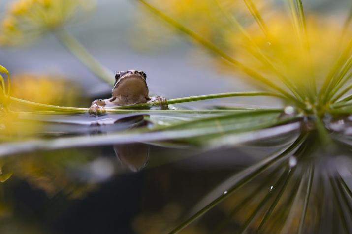 Любопытный лягушонок. Фото: Людмила Гудина