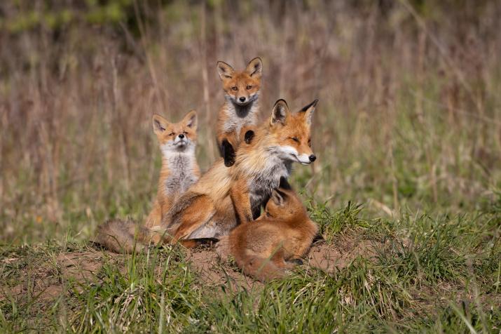 Семейный портрет. Фото: Алексей Петров