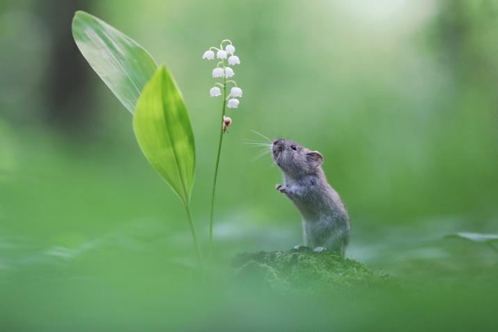 Мышь и улитка. Фото: Вадим Трунов