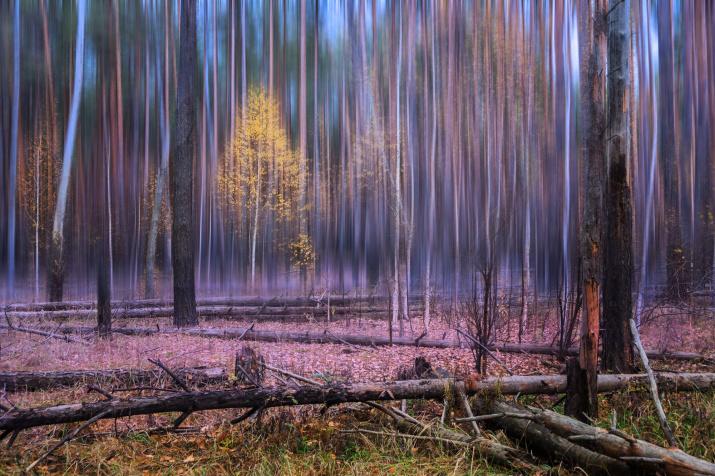 Осенняя фантасмагория. Фото: Валерий Лушин