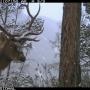 Фото с видеорегистраторов в Саяно-Шушенском заповеднике