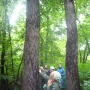 Обследование аллеи лиственниц в парке у села Денисовка, фото: Д.Климов