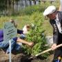 Ветеран сажает дерево
