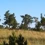 Кызылагаш – березово-сосновый бор колкового типа на границе Силети-Тенгизской впадины и Казахского мелкосопочника