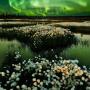 """""""Cotton Grass and Light"""". Photo: Igor Turovsky"""