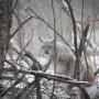 Рысь. Фото: Дмитрий Вахрушев