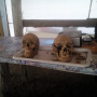 Правый череп имеет внешние признаки, характерные для неандертальца. Фото предоставлено участниками экспедиции