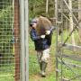 Фото предоставлено Центром спасения медвежат-сирот
